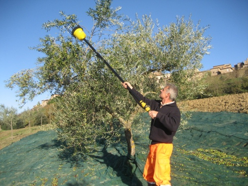 Olive Harvesting machine