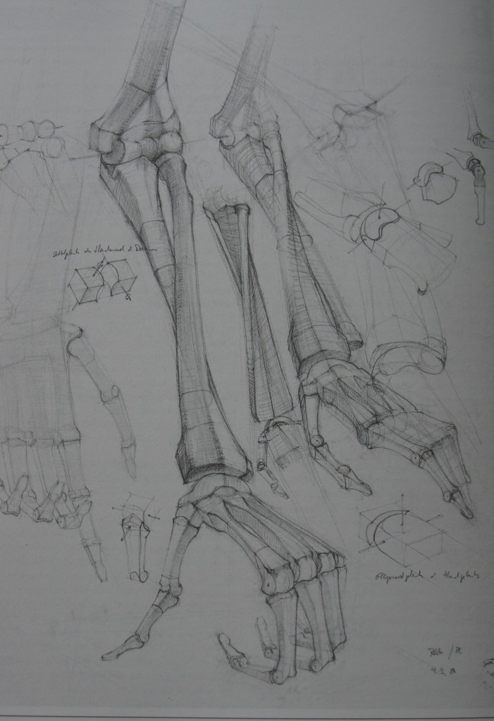 An anatomy drawing by a nameless second year student at art school